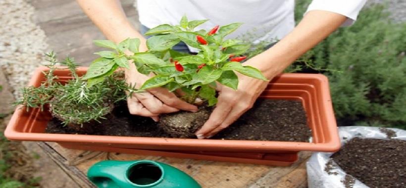 Parque Villa-Lobos recebe feira de orgânicos neste fim de semana